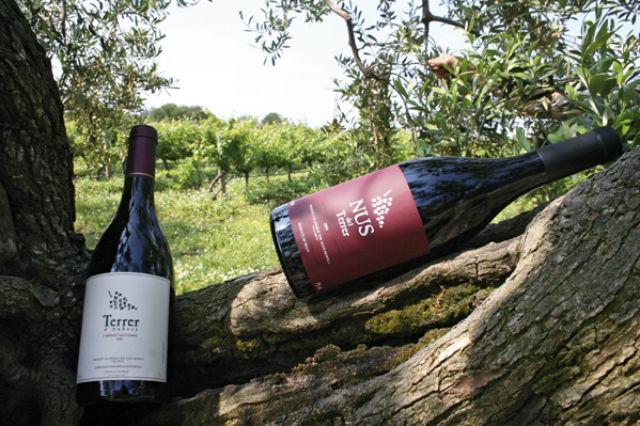 Vinos DO Tarragona: Vinyes del Terrer