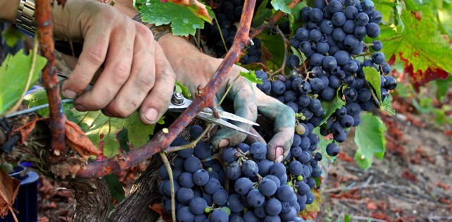 Conceptos basicos saber vinos Javier Campo SoplosViajeros